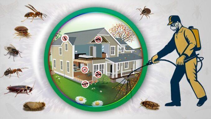 Böcek İlaçlama Gerekliliği